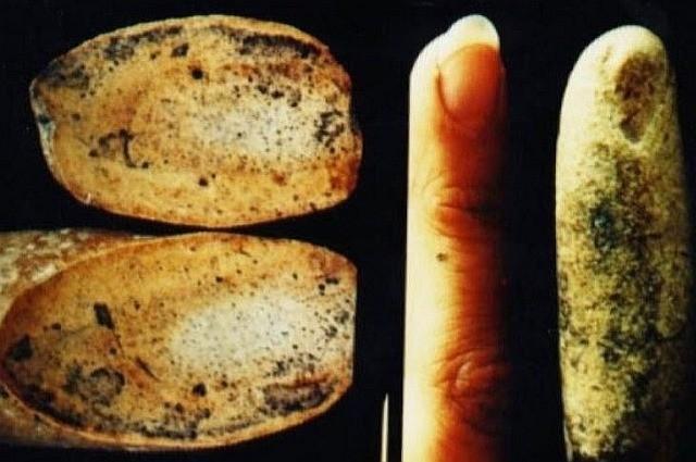 Загадка окаменелого человеческого пальца возрастом в 100 миллионов лет