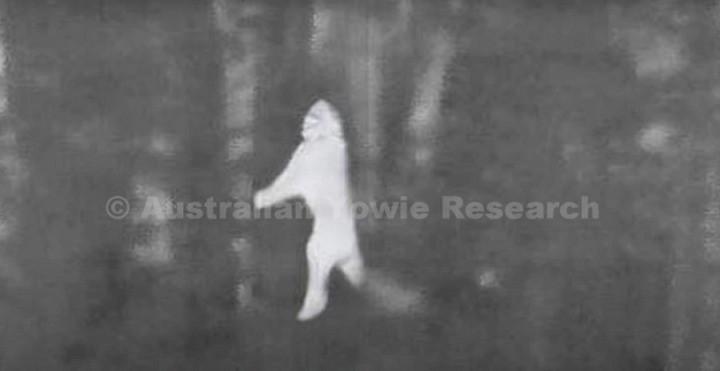 «Охотники на йови» опубликовали видео огромных фигур в лесу, сделанное с помощью тепловизора