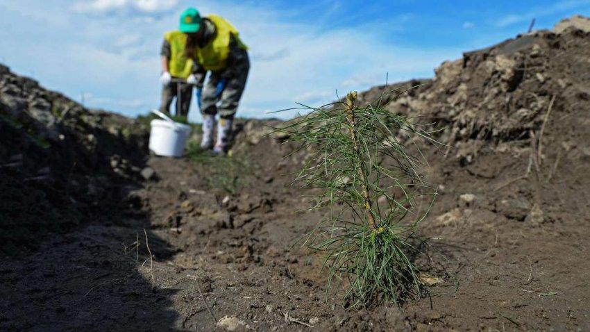 Восстановление лесов в Европе увеличит количество осадков. Новое исследование