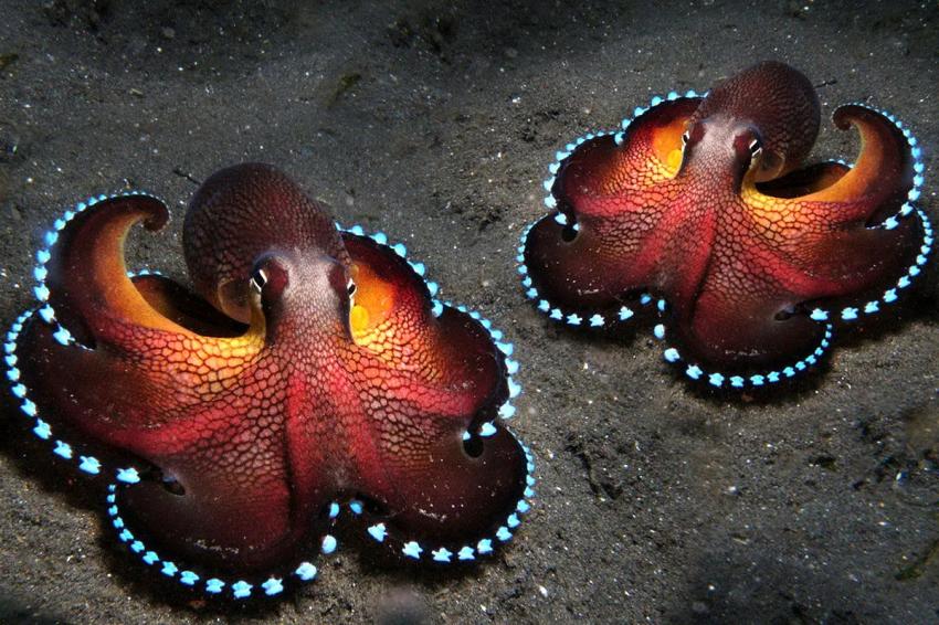Присоски для обучения: почему осьминоги такие умные?