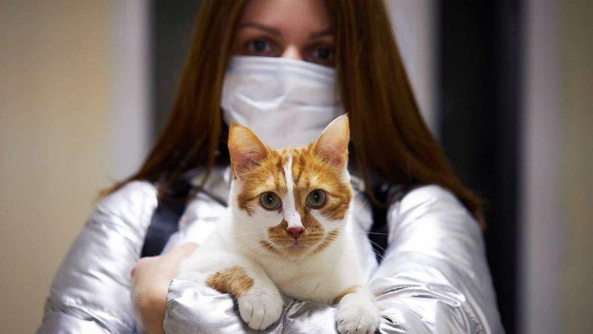 Варианты COVID: могут ли новые опасные вирусы развиться у домашних и сельскохозяйственных животных?