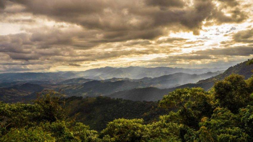 Атлантический лес Бразилии в ближайшие 50 лет изменится больше, чем когда-либо с момента последнего ледникового периода