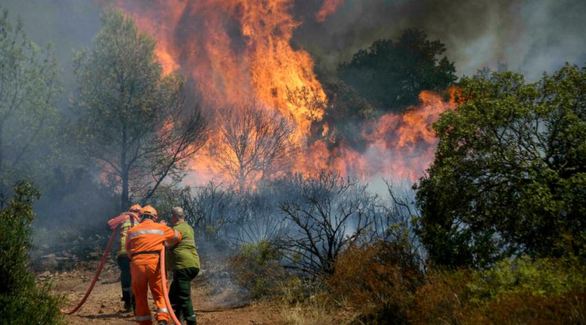 Лесные пожары во Франции уничтожили одну из самых уникальных точек биоразнообразия в Европе