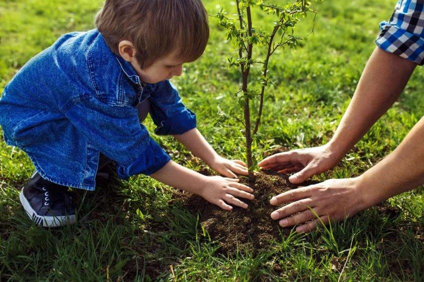 Любопытные дети: Как посадка 8 миллиардов деревьев каждый год в течение 20 лет повлияет на климат Земли?