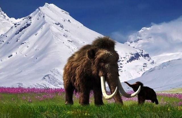 Британская компания решила возродить мамонтов, создав гибрид мамонта и слона уже через 6 лет