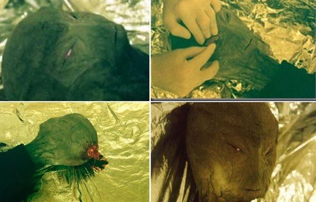 Странная история с убитой собакой, почти убитым пришельцем и его фото и видео