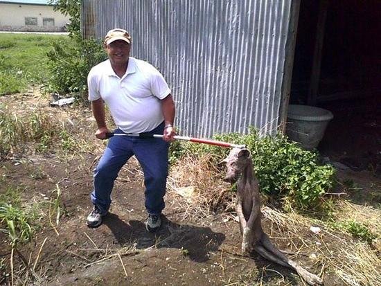 «Техасские чупакабры» не просто койоты с чесоткой