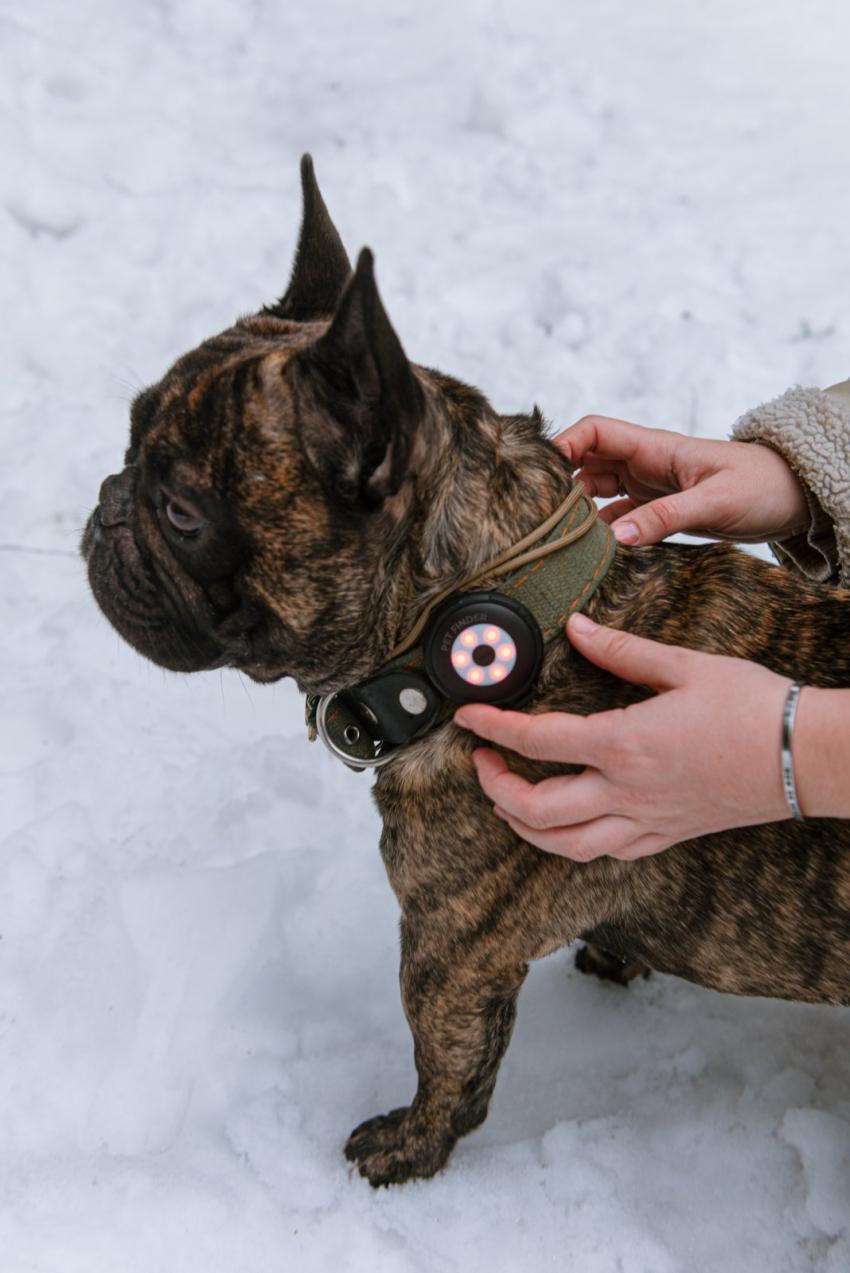 Рейтинг лучших GPS трекеров для собак